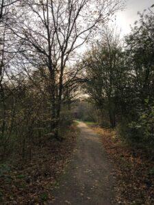 Wandern im Naturschutzgebiet Kennemerduinen